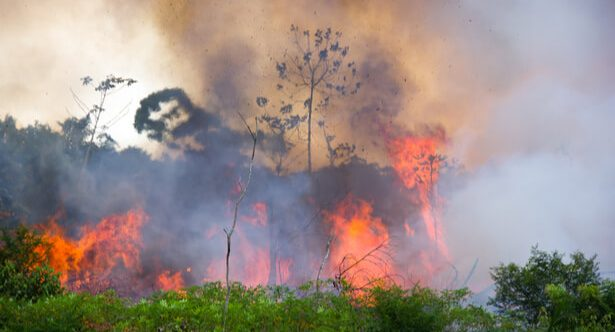 incendies amazonie