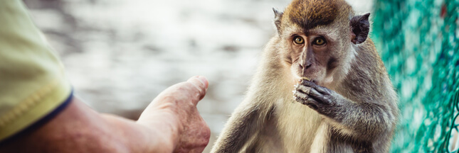 Trafic d'animaux: une cagnotte pour racheter un zoo, bonne ou mauvaise idée?
