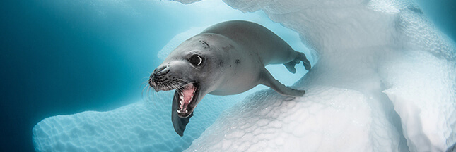 Ocean Art 2019 – les 7 photos sous-marines qu'on a préférées