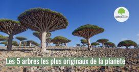 Les 5 arbres les plus originaux de la planète