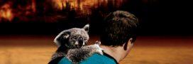 Comment aider les animaux sauvages victimes des incendies en Australie?