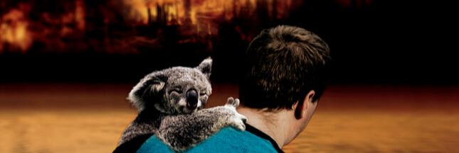 Comment aider les animaux sauvages victimes des incendies en Australie ?