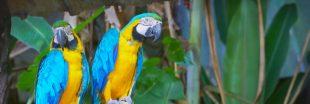 Le taux d'extinction des oiseaux a diminué ! Une lueur d'espoir ?