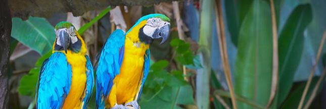 Le taux d'extinction des oiseaux a diminué! Une lueur d'espoir?