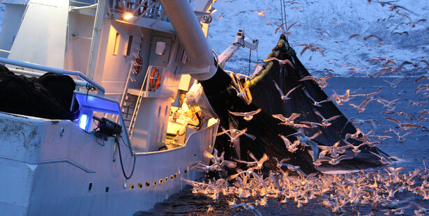 bateaux pêche iillegal
