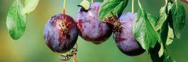 Le bio meilleur pour la santé…  grâce aux insectes!