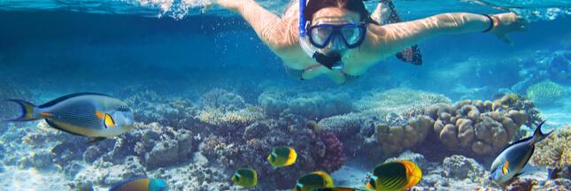 Les crèmes solaires interdites pour protéger les coraux