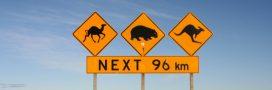 Sécheresse en Australie: 10.000 dromadaires à abattre!