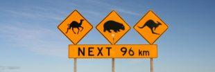 Sécheresse en Australie : 10.000 dromadaires à abattre !