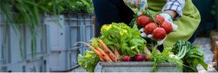 Food for good - Le plus grand concours mondial dédié à l'alimentation