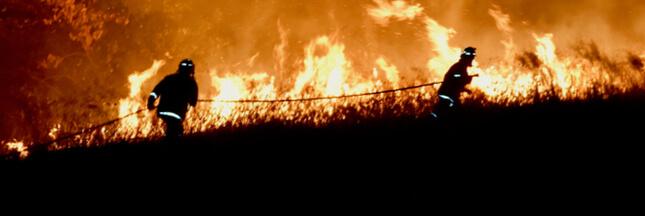 Incendies en Australie : près de 500 millions d'animaux sont déjà morts