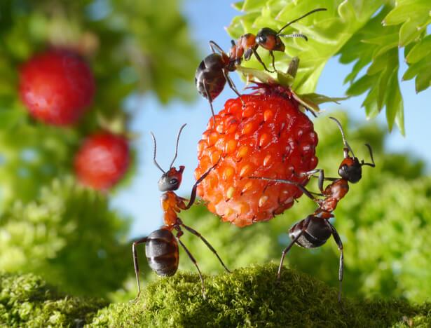 insectes bio