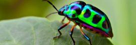 Les insectes meurent et nous devons réagir: le cri d'alarme de 70 scientifiques internationaux