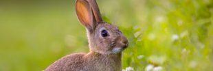 Liste Rouge UICN 2019 : 73 espèces déclinent, 10 progressent