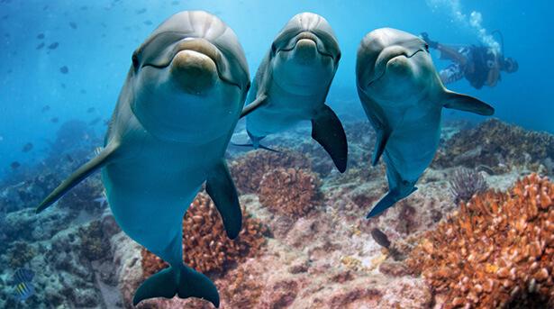manger dauphin france