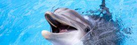 En France on mange encore des dauphins, dénonce Sea Shepherd