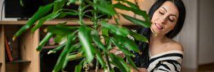 Les plantes d'intérieur qui résistent même à ceux qui n'ont pas la main verte!