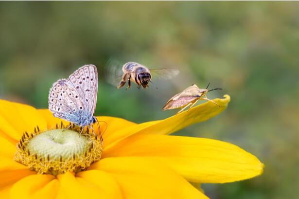 sauver insectes
