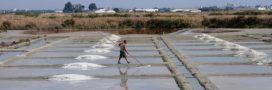 Le sel de Guérande va-t-il disparaître à cause de la pollution?