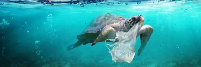 Encore une tortue secourue avec l'estomac plein de plastique