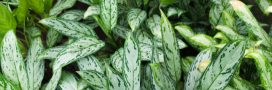 6 plantes vertes qui ne craignent pas les intérieurs sombres