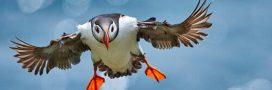 Oiseaux – Les 6 plus belles photos 2020 du concours BPOTY