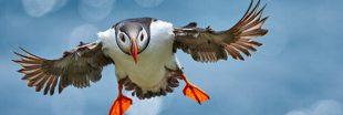 Oiseaux - Les 6 plus belles photos 2020 du concours BPOTY