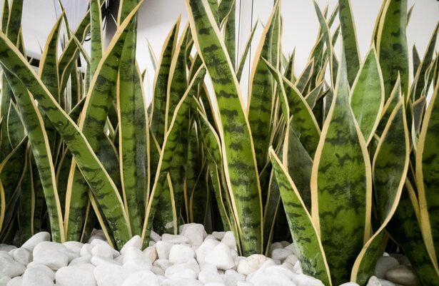 plantes interieur sombre