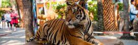 Hollywood  interdit les fêtes avec des animaux sauvages