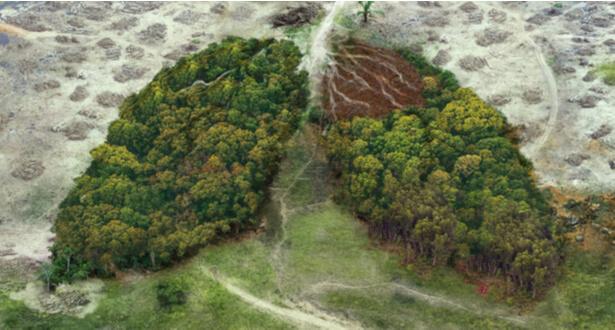 banques deforestation