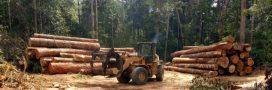 Votre banque est-elle complice de la déforestation?