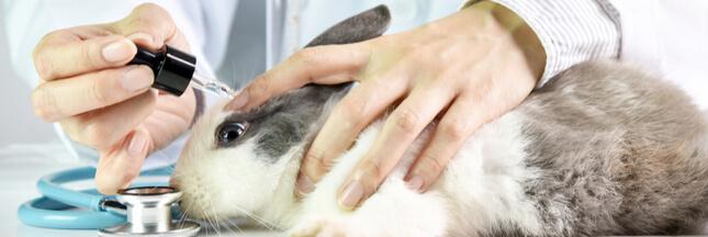Encore 10 millions d'expériences sur les animaux en Europe tous les ans