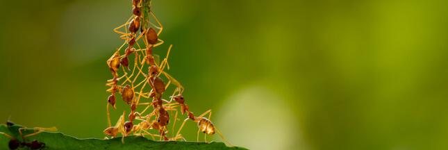 Si les humains vivaient comme des fourmis…
