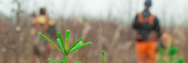 Comment bien gérer sa forêt privée et faire du bois pour l'hiver ?