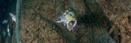 Des filets de pêche biodégradables contre la pollution plastique