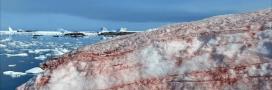 Le réchauffement climatique fait saigner la glace en Antarctique