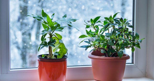 Les soins à apporter aux plantes d'intérieur en février