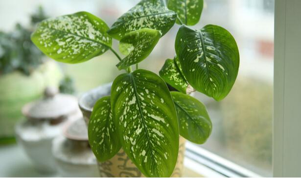 plantes interieur ombre