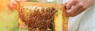 Produits de la ruche : lequel choisir et pour quel usage ?