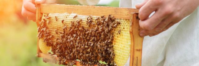 Produits de la ruche: lequel choisir et pour quel usage?