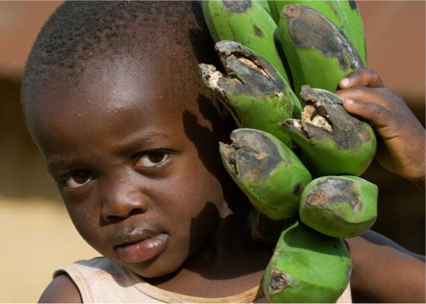pesticides Afrique