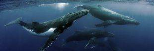 Si les humains vivaient comme des Baleines...