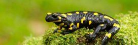 Apprendre à connaître la biodiversité ordinaire pour mieux la protéger