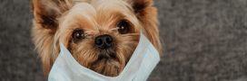 Par peur du coronavirus, ils veulent euthanasier leur animal de compagnie!