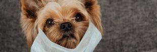 Par peur du coronavirus, ils veulent euthanasier leur animal de compagnie !