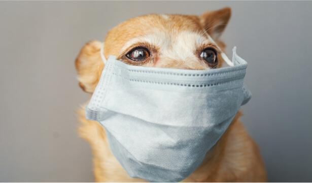 coronavirus animaux de compagnie
