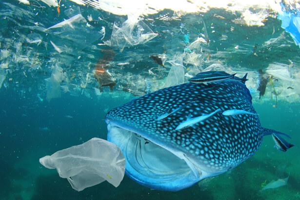 plastique disparu , dechets ocean