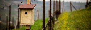 Viticulture - Favoriser les oiseaux avec des nichoirs dans les vignes
