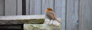 Confinement - Découvrez la biodiversité de votre jardin et aidez la science