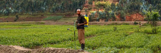 Dangereux et bannis en Europe, des pesticides s'écoulent en Afrique